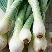 Spring Onions_1